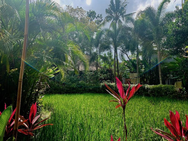 Nature-in-Bali Yoga Teacher Training Courses