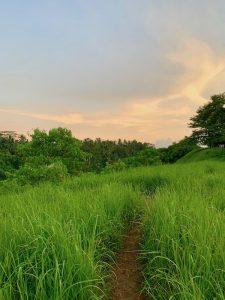 Rice-Fields-Ubud-225x300 Yoga Teacher Training Bali
