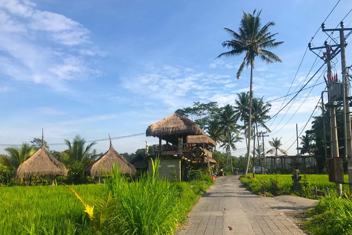 campuhan-ridge-walk-20 Yoga Teacher Training Bali