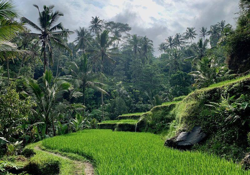 Bali-Temple-landscape Yoga Teacher Training Bali