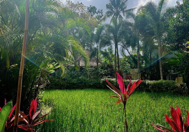 Nature-in-Bali-landscape Schedule & Prices Yoga Teacher Training